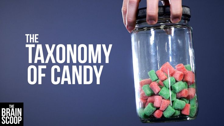 Scientists Attempt to Classify Different Types of Candy to Help Explain Taxonomy