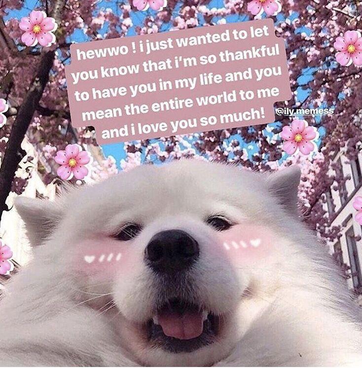 45 Of The Funniest Doge Memes Funny Doge Dog Memes Doge Meme