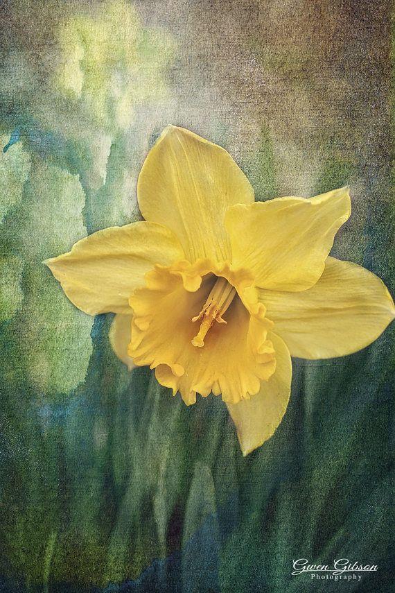 Daffodil Spring Flower Photo Flower Decor Daffodil Etsy Flower Photos Daffodils Art
