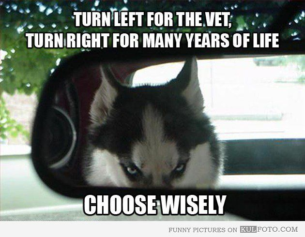 Turn left for the vet, turn right for many years of life. Choose wisely.