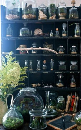 DIY: How to make your own Terrarium  Picture:http://www.thecollectiveloop.com/2011/06/self-contained-ecosystems.html#.Uw8bE-N5Mwc