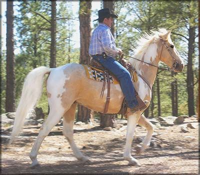 For Sale - COPY'S GOLDEN CREAM #20401207 - Gorgeous 15.2 hand, palomino tobiano Tennessee Walking Horse gelding, foaled 06/16/2004. Double reg. as Spotted Saddle Horse. A very good looking gelding with wide muscular shoulders and hips and a deep athletic chest!  He has been trail ridden all over the United States. Cream is all business. What a ride!! Located in New Mexico. Priced at $6500  http://www.trailhorsesofthewest.com/horses-for-sale.htm  http://youtu.be/Iu23T1yWmz8