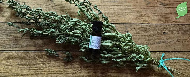 Découvrez une recette de synergie avec des huiles essentielles pour lutter contre les cheveux gras et les pellicules grasses au quotidien.