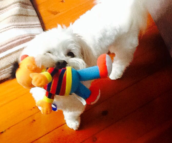 Poor Ernie !!!!!!
