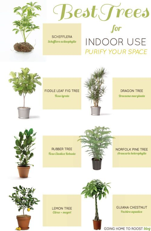 best trees for indoor use / going home to roost