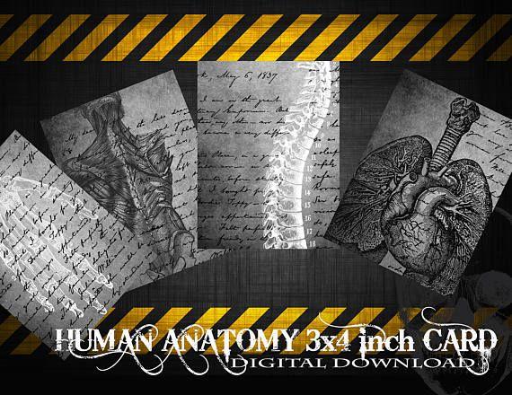80% Off Human Anatomy Digital Collage Sheet Digital