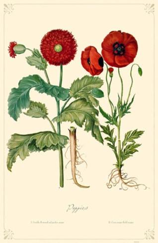 Poppies Flowers Masterprint