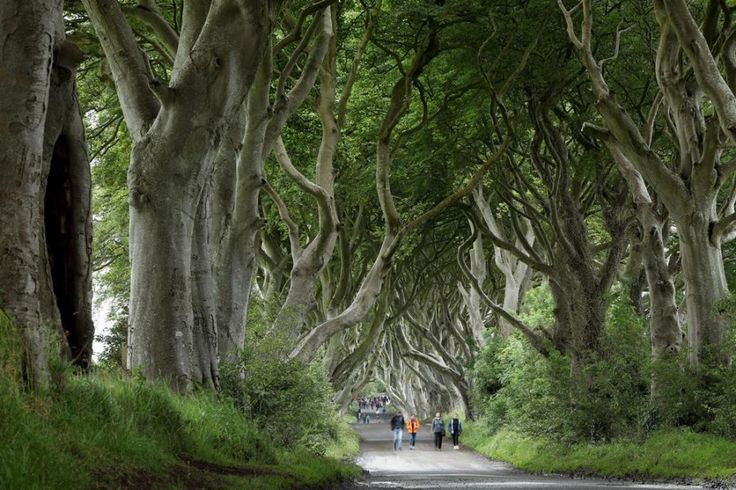 Top 15 Amazing facts about Ireland