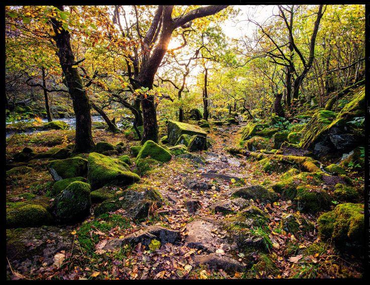 Autumn. Saelandskogen, Rogaland, Norway, October 25th 2015