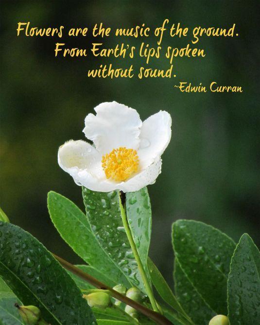 beauty break flower quotes nature quotes garden quotes
