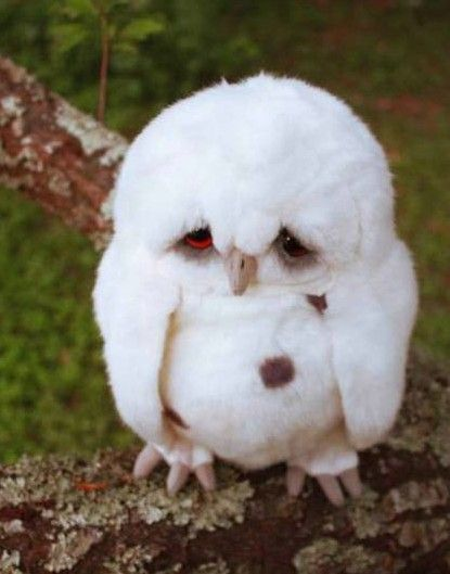 Saddest owl ever.  This is the cutest thing I've ever seen!