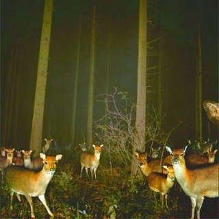 deer cam: Inspiration, Animal Kingdom, Headlights, Beautiful, Pictures, Night, Things, Photography, Deer