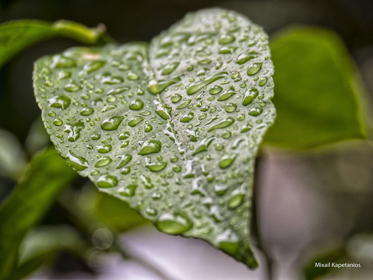 Kαρδιες στην βροχή.....