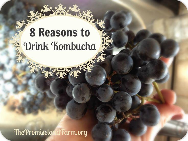 Eight Reasons to Drink Kombucha