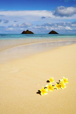Plumerias on the Sand, Oahu, Hawaii