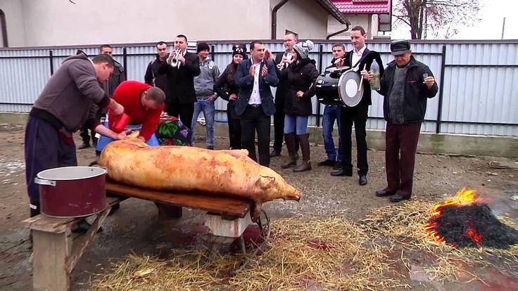 Formatia Cetina 2014   La Pomana Porcului