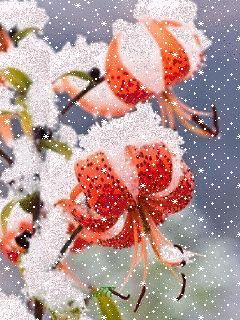 Цветы 🌺 и снег ❄