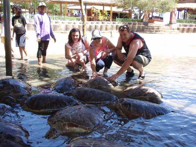 Turtle Conservation Island