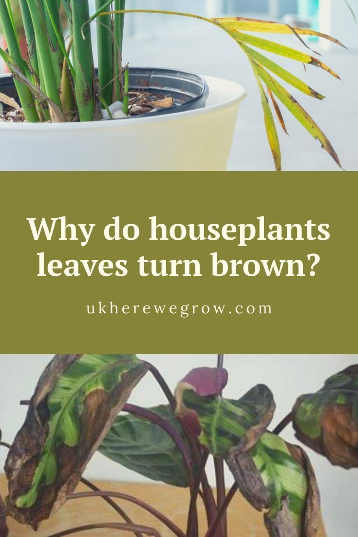 Why Do Houseplants Leaves Turn Brown In 2020 Plant Care Houseplant Plant Leaves Turning Brown Houseplants