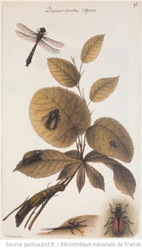 Plusieurs insectes différents : [dessin] / Jn Jque Lequeu delin. Auteur : Lequeu, Jean Jacques (1757-1825?). Dessinateur Date d'édition : 1777-1824 Sujet : Insectes Sujet : Âne Type : Représentations animalières -- 18e siècle,image fixe,dessin Format : 1 dess. : plume, lavis, en coul. ; 29,1 x 17 cm (f.) Format : image/jpeg Droits : domaine public Identifiant : ark:/12148/btv1b7703464t