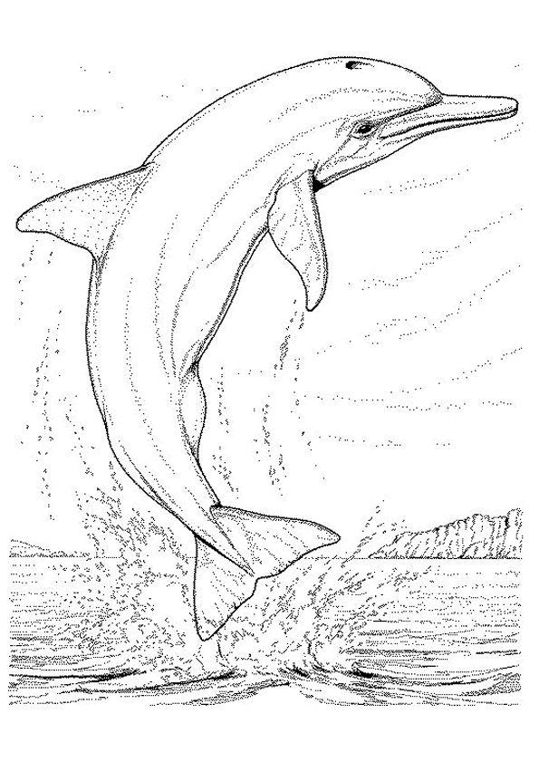 Portrait très réaliste d'un dauphin sur l'eau, à colorier