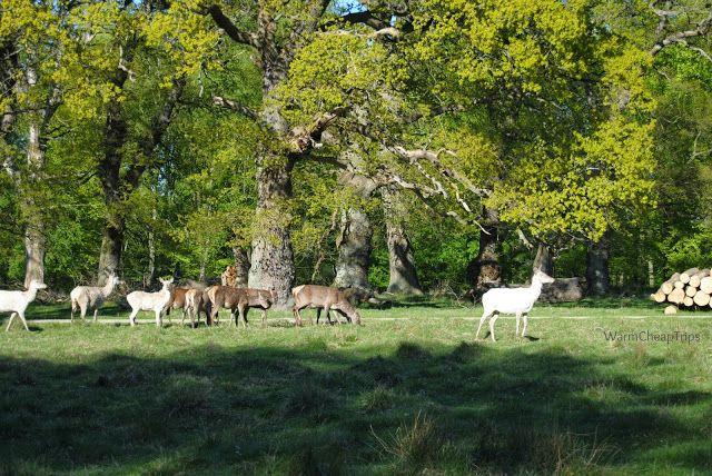 Parco dei Cervi
