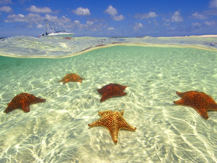 Cushion Sea Stars: Sea Stars, Places Daydreaming Stuffs, Dolphins Ocean Waves Beaches, Favorite Places, Nature S, Amazing Place, Amazing Animals, Cushion Sea, Island