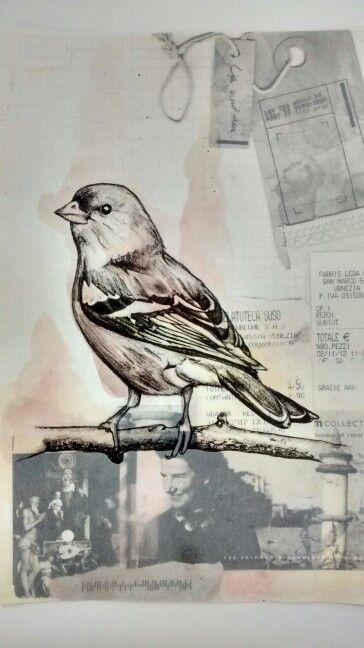 Bird wildlife art, Paula Swisher style, drawn with graphite and water colour by Karolina Czerwinska