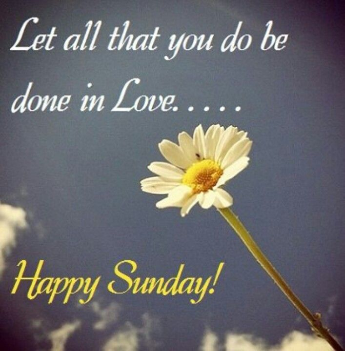 Happy Sunday | Sunday quotes | Pinterest | I love, In love ...