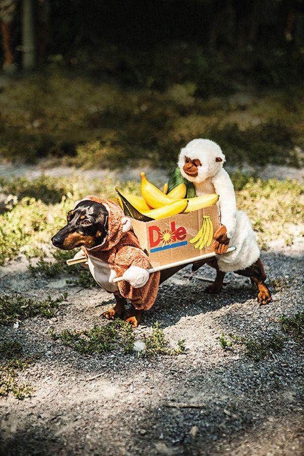 Dos Monos Llevando Una Caja De Platanos Dog Costumes Funny Dog