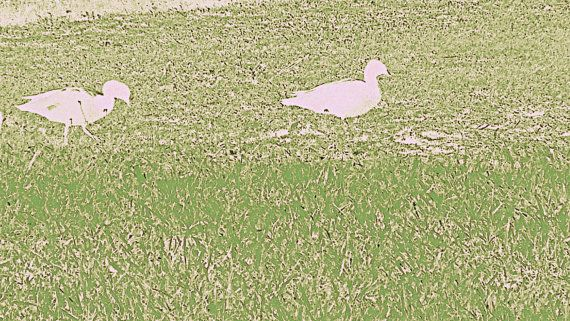 Pale Pink Duck Outline on Textured Grass by BlackbirdArtDesign, $35.00