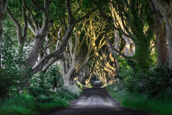 En este bosque, de más de 300 años de antigüedad, las ramas de los árboles forman un gran arco sobre... - Corbis. Texto: Redacción Traveler