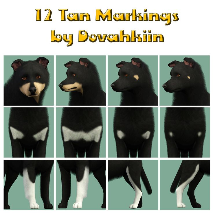 tan markings - by Dova Creations