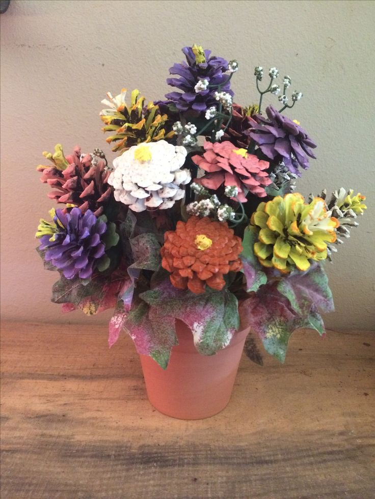 Pine cone flowers in terra cotta pot