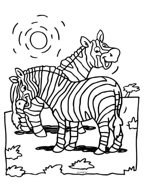 zebra kleurplaat - Google zoeken