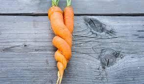 Výsledek obrázku pro mrkev