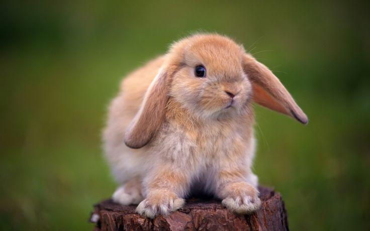 Cute Rabbits Wallpapers (6)