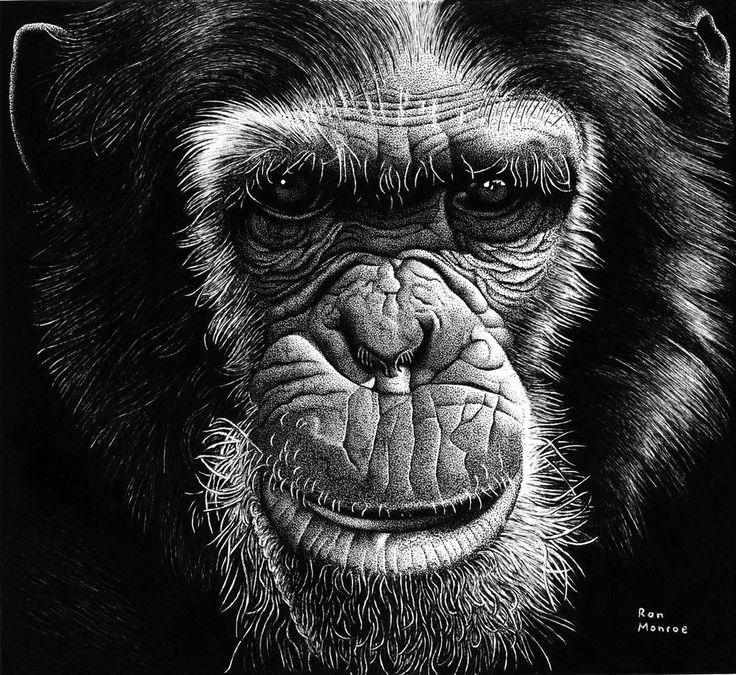 Chimpanzee by ronmonroe on deviantART