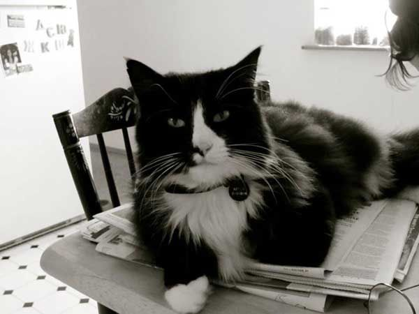 """Henri says, """"Every day I lie on newspapers, yet I learn nothing. Sort of like you with the internet."""""""