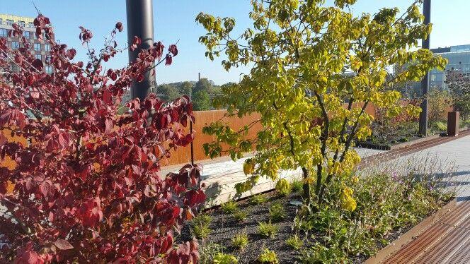 Rode en gele struik, den bosch