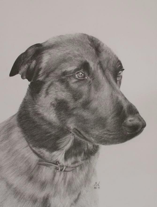 Pencil drawing of a dog  • mariellevanleeuwen@live.nl • AR•T•INT • www.facebook.com/artintx • instagram @artint •••