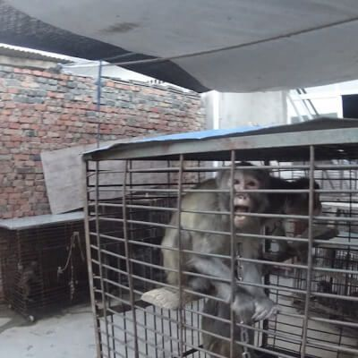 A PETA Asia investigator visited Suzhou's circuses and training facilities and documented appalling abuse and animal suffering on a massive scale.