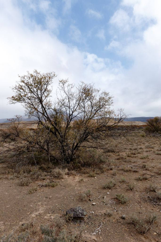 Tree In The Middle Of Nowhere - Fraserburg Landscape  Tree In The Middle Of…