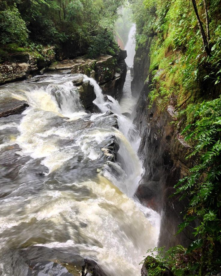 """Raizama roots. #chapadadosveadeiros #chapadadosveadeirosgo #chapadadosveadeirosnationalpark #raizama  #brasil #cerrado #trip #travel #roots #trilhas…"""