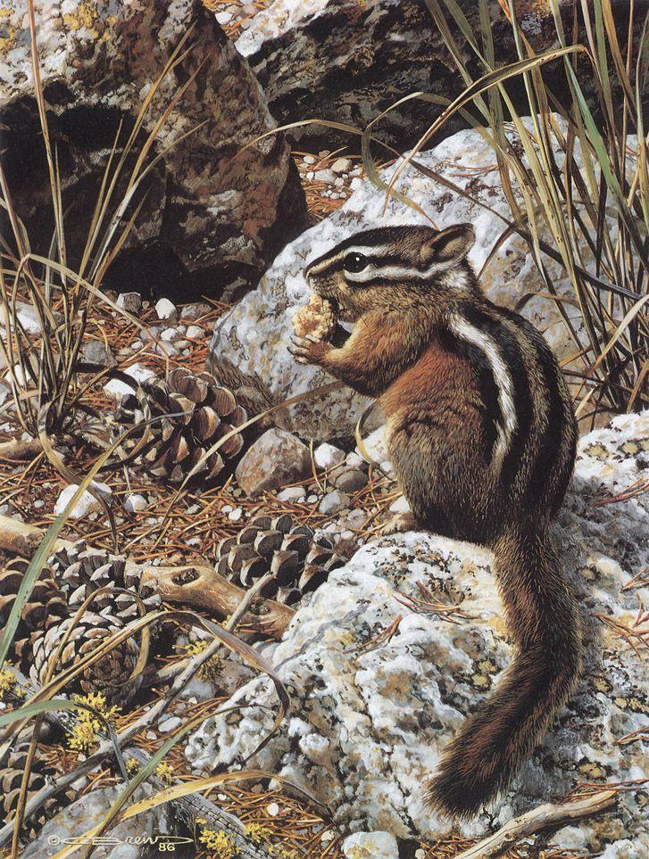 Carl Brenders Wildlife Paintings Double Trouble American Raccoons