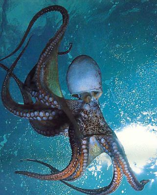 OctopusNature Girls, Sea Life, Sea Creatures, Beautiful Planets, Octopuses People, Amazing Animal, Random Stuff, God Creatures, Cutest Animal