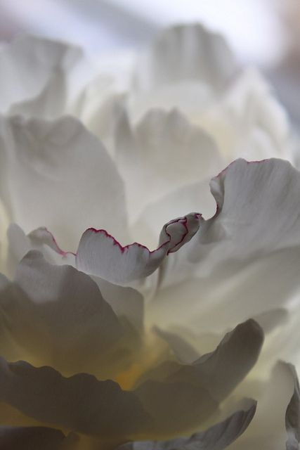 such delicate beauty...