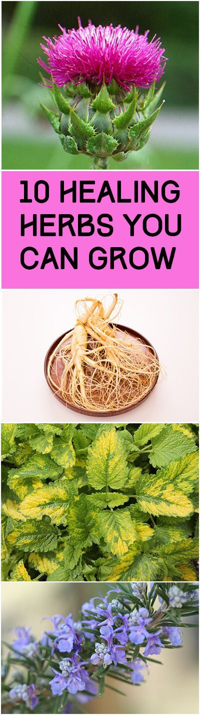 10 Healing Herbs You Can Grow... Cinnamon, Rosemary, Garlic, Cranberries, Ginger, Ginseng, Lemon Balm, Milk Thistle, Cayenne Pepper, and White Willow Bark.