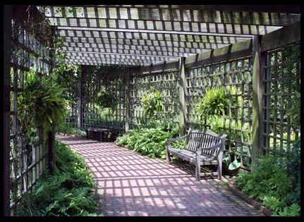 102 best images about trellises on pinterest - Pergola climbing plants under natures roof ...