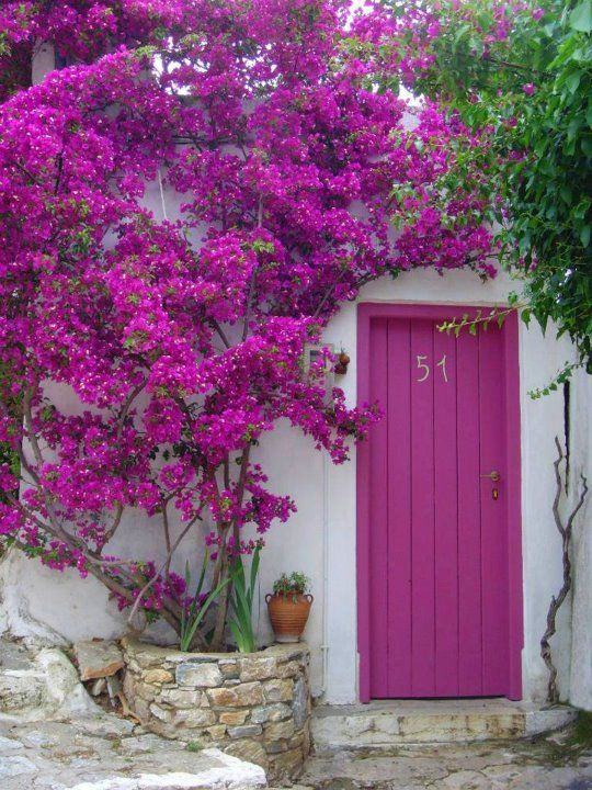 A colour splash- Alonissos - Northern Sporades.